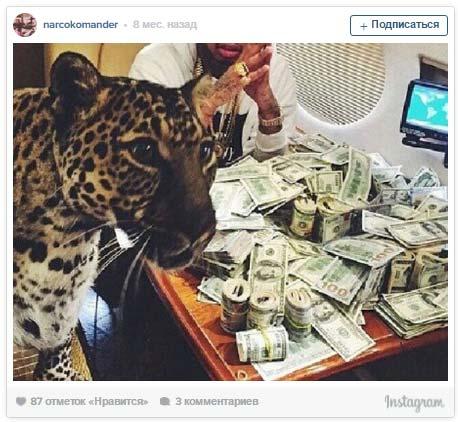 instagram - narcokomander